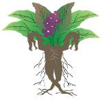 logo_dragora_esc150
